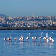 """""""A Cagliari il mare come strategia di sviluppo per sbloccare e liberare la città. Ma occorre una diversa classe dirigente"""", di Franco Meloni"""