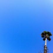 A Cagliari la domenica delle palme: che muoiono, insieme al paesaggio cittadino. Battaglia persa o tutta da combattere?